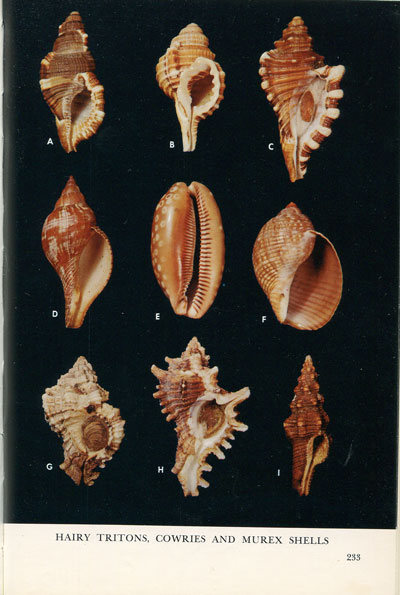 WARMKE G.L. and ABBOTT R.T. Caribbean seashells. - A guide to the marine mollusks of Puerto Rico and other West Indian Islands, Bermuda and the Lower Florida Keys.