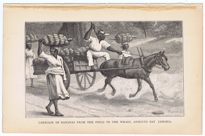 ANON Carriage of bananas from the field to the wharf, Annotto Bay, Jamaica.