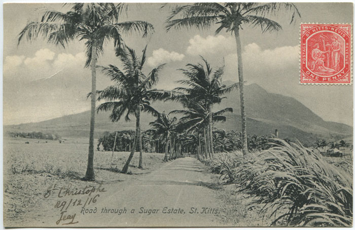 A. MOURE LOSADA Road through a Sugar Estate, St Kitts. - No 97a