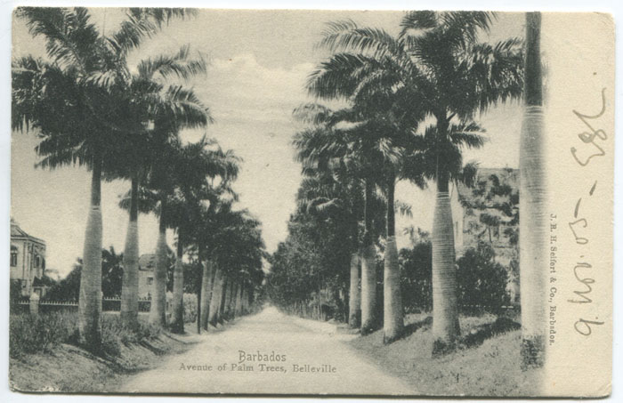 J.R.H. SIEFERT & CO Barbados. Avenue of trees. Belleville.