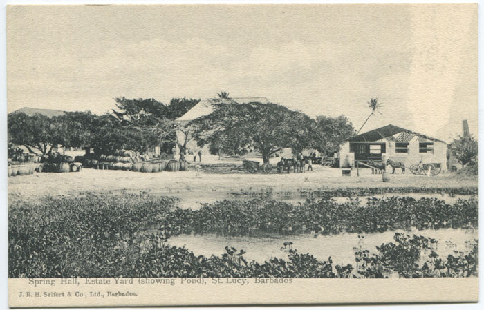 J.R.H. SEIFERT & CO Spring Hall, Estate Yard (showing pond), St Lucy, Barbados.